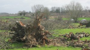 Felled cherry orchard near Teynham by M McCarthy