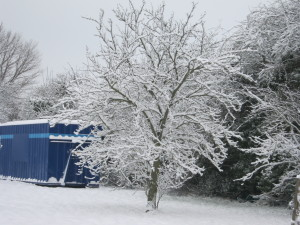 Shipping container on an orchard in Teynham, by M McCarthy